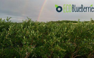 Τα βιολογικά μύρτιλα της ECOBlueberries πήραν κι άλλη πιστοποίηση ολοκληρωμένης διαχείρισης GLOBALG.A.P.!